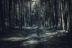 Fantasietürkis-Blaulichtfarbwaldszenenhintergrund lizenzfreies stockbild