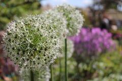 Fantasievolle Blumen Stockbilder