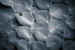 Fantasifärger av sidor för tropisk växt Royaltyfri Fotografi