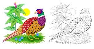 Fantasiillustration av den gulliga fasanen med ljust befjädra Färgrik och svartvit sida för färgläggningboken för ungar royaltyfri illustrationer