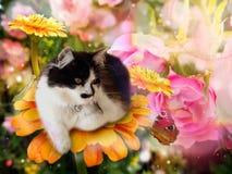Fantasikatt på blomman med fjärilen royaltyfri foto