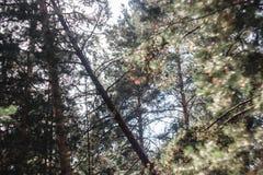 Fantasin tänder i den dimmiga skogen för den magiska solljussagan royaltyfri foto