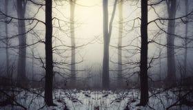 Fantasiskog med snö och dimma på soluppgång arkivfoton