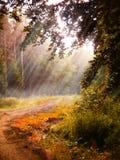 Fantasiskogbakgrund Arkivfoto