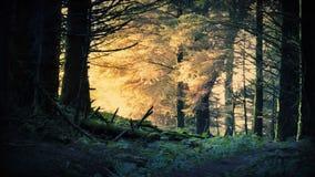 Fantasisoluppgång i skogen arkivfilmer