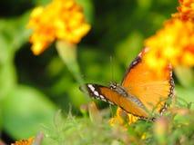 Fantasivårträdgård Royaltyfri Fotografi