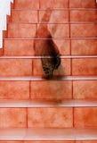 Fantasma del gato Imágenes de archivo libres de regalías