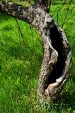 Fantasma di legno Fotografie Stock Libere da Diritti