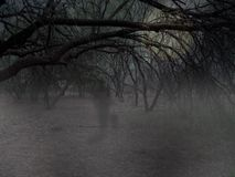 Fantasma en maderas Imagen de archivo