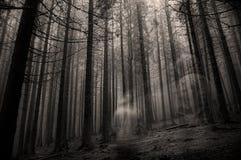 Fantasma na floresta Fotos de Stock Royalty Free