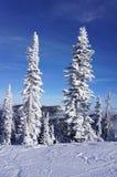 Fantasma Sentinels3 della neve: Il pesce bianco ricorre alberi di Natale affollati bianchi fotografia stock libera da diritti