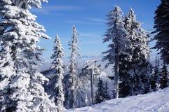 Fantasma Sentinels2 della neve: Il pesce bianco ricorre alberi di Natale affollati bianchi fotografia stock