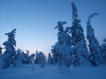 Fantasmas da árvore no monte Imagens de Stock Royalty Free