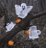 Fantasmas y calabazas en el bosque Foto de archivo libre de regalías