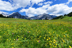 Fantastic alpine landscape with bright meadow flowers under blue sky Royalty Free Stock Image