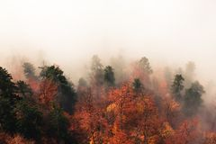 Fantastic autumn forest landscape, lots of trees in the fog Stock Photos