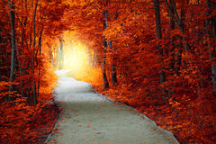 Fantastic Autumn forest with path and magical light Royalty Free Stock Image