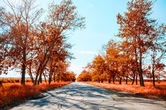 Fantastic autumn landscape with provincial road Stock Photo