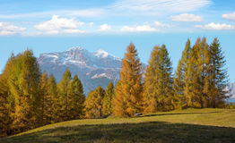 Fantastic autumn landscape with yellow larch on a background of. Mountains in a sunny day. Dolomites, South Tyrol, Alps, Italy. Meditation, rest, calm, anti Royalty Free Stock Photography