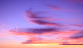 Fantastic beautiful sky at sunset, cirrus clouds of lilac color. Flock of birds blurred in motion stock photos