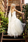 Fantastic beauty bride Stock Images