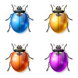 Fantastic beetles Royalty Free Stock Photography