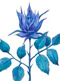 Fantastic blue rose on a white background. watercolor illustration stock illustration