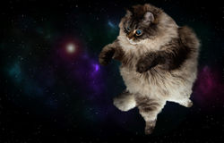 Fantastic  cat in space. With galaxy on the background Stock Photography