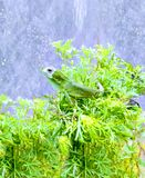 Fantastic chameleon. Chameleon  fauna fantastic real agamidae royalty free stock image