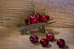 Fantastic cherry harvest. Royalty Free Stock Photo