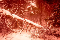 Fantastic Christmas mysterious winter snowy forest. Dramatic fallen old tree. Creative collage. Russia stock image
