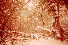 Fantastic Christmas mysterious winter snowy forest. Dramatic overcast. Creative collage. royalty free stock photo