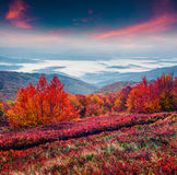 Fantastic colors autumn landscape in the Carpathian mountains. Royalty Free Stock Images