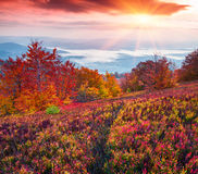 Fantastic colors autumn landscape in the Carpathian mountains. Stock Photo