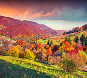 Fantastic colors autumn landscape in the Carpathian mountains Royalty Free Stock Image