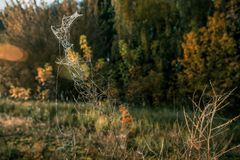Fantastic drove in the autumn grass. Is covered by frost stock photo