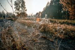 Fantastic drove in the autumn grass. Is covered by frost stock image