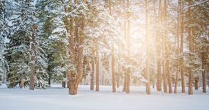 Fantastic Fairytale Magical Landscape View Christmas Tree. Forest Park in Winter on a Sunny Day During a Snowfall. Concept Christmas Winter New Year Scenery stock photo
