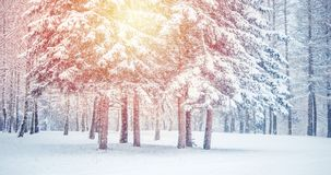 Fantastic Fairytale Magical Landscape View Christmas Tree. Forest Park in Winter on a Sunny Day During a Snowfall. Concept Christmas Winter New Year Scenery stock photography