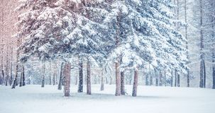 Fantastic Fairytale Magical Landscape View Christmas Tree. Forest Park in Winter on a Sunny Day During a Snowfall. Concept Christmas Winter New Year Scenery royalty free stock image