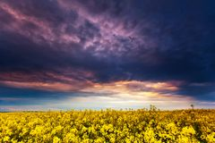 Fantastic field at the dramatic overcast sky. Dark ominous clouds. Ukraine, Europe. Beauty world stock photography
