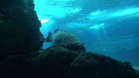 Fantastic Fishes under Blue Water stock video footage