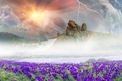 Fantastic flowers - crocuses Royalty Free Stock Photo