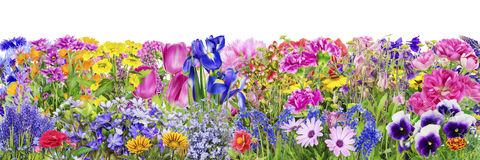 Fantastic flowers bed Stock Photo