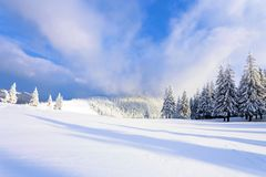 Fantastic fluffy Christmas trees in the snow. Postcard with tall trees, blue sky and snowdrift. Winter scenery in the sunny day. Mountain landscapes royalty free stock photo