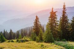 Fantastic foggy day and bright hills by sunlight. Royalty Free Stock Photos
