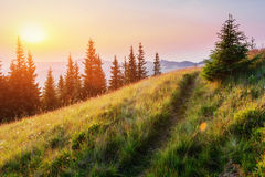 Fantastic foggy day and bright hills by sunlight. Stock Images