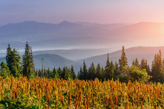 Fantastic foggy day and bright hills by sunlight. Royalty Free Stock Photography