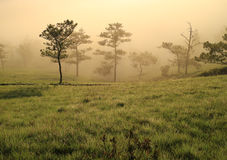 Fantastic foggy mountain with fresh green grass Royalty Free Stock Photography