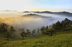 Fantastic foggy mountain with fresh green grass Royalty Free Stock Image